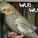 Dubstep fuglen