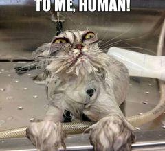 Katten der hader at komme i bad!
