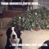 Hunde og juletræer