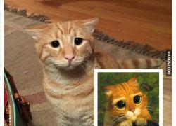 Har vi ikke set den kat før?!?
