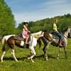 Det bedste hesteudstyr behøver ikke at koste en bondegård