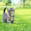 Køb kattemad der passer til din kats alder