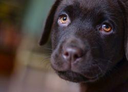 Vælg kvalitetsfoder til din hund