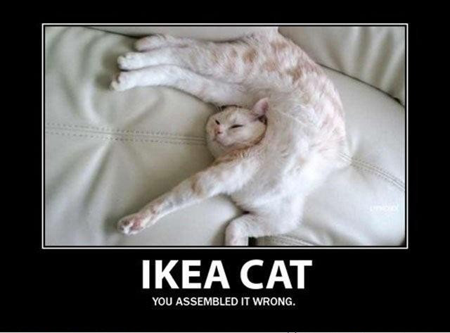 ikea-cat-funny-posture-photo