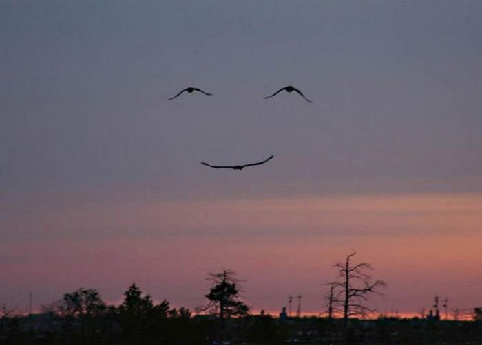amazing-picture-of-three-birds-that-look-like-a-smile
