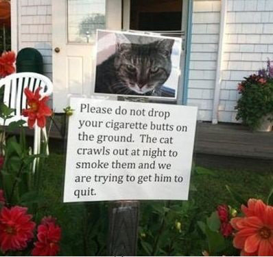 cat-smoking-cigars-quit-pic