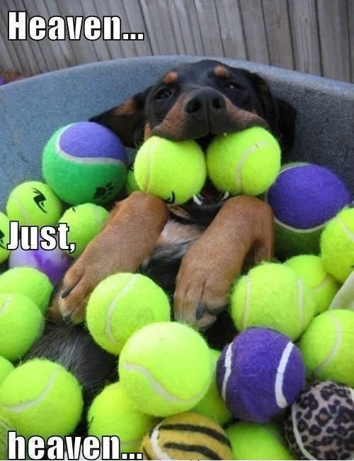 dog-biting-tennis-balls-pic