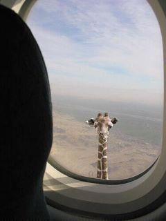 du ved du har været i afrika når...