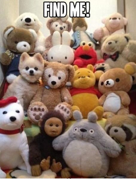 funny-collection-of-fluffy-toys-and-a-dog-hiding-among-them