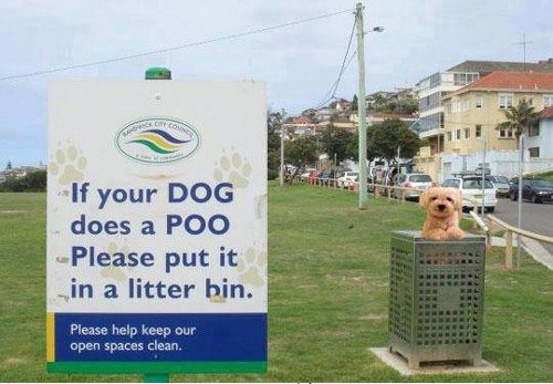 dog-making-poo-litter-bin-photo