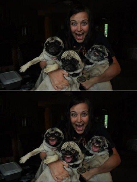 girl-holding-pugs-photoshop-pic