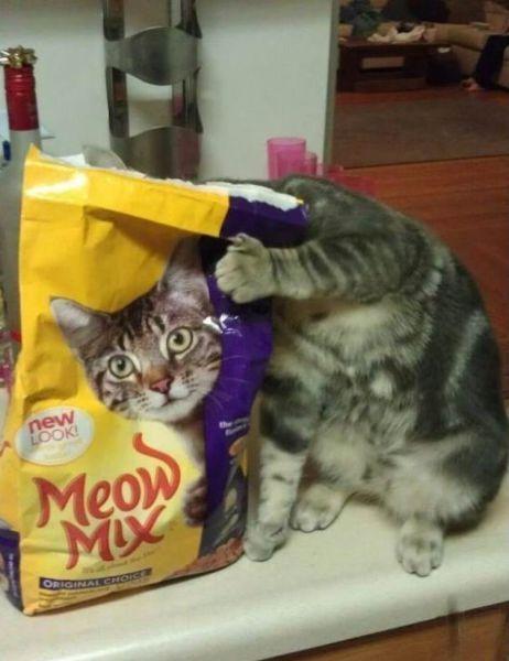 kat med humor