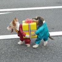 Har du også tøj til din hund-måske er det her en ide