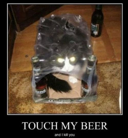cat-in-beer-bag-beer