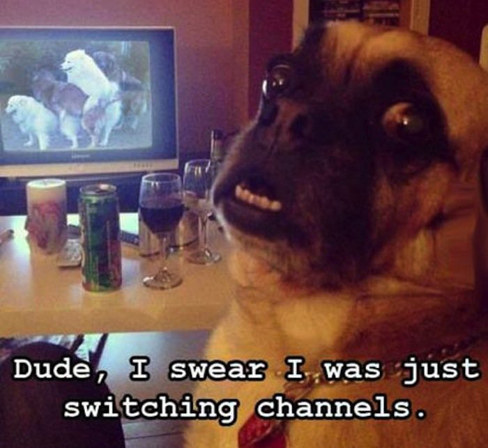 funny-dog-watching-adult-stuff