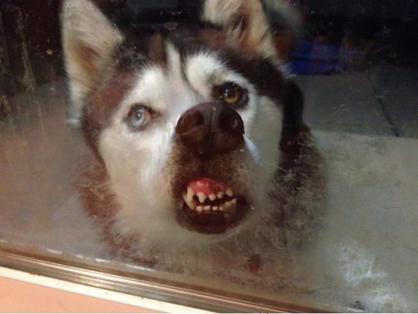 luuuk mig ind!