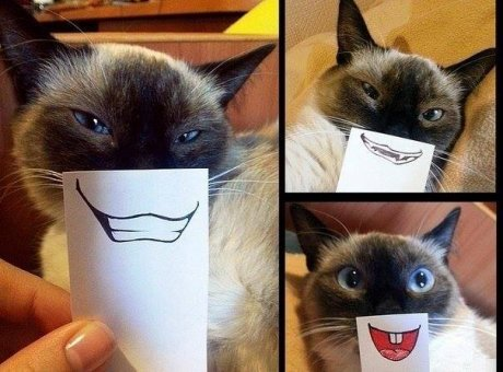cat-photo-shoot-paper-faces-funny