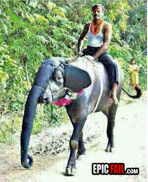 elephant-fail
