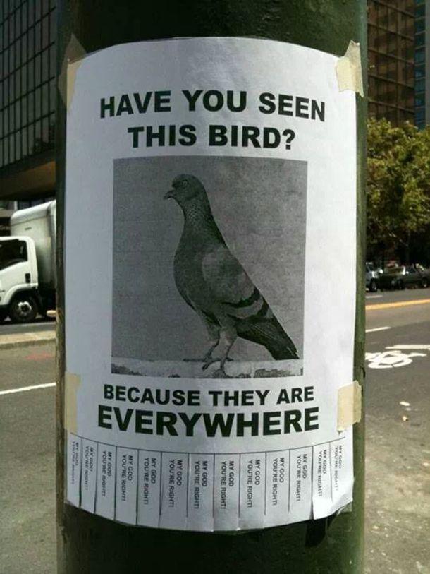 har du set denne fugl