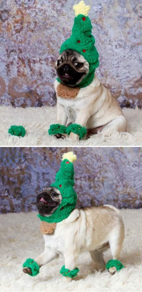 pug-costume-Chrisstmas-tree
