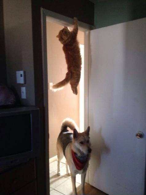 undskyd men har i set katten