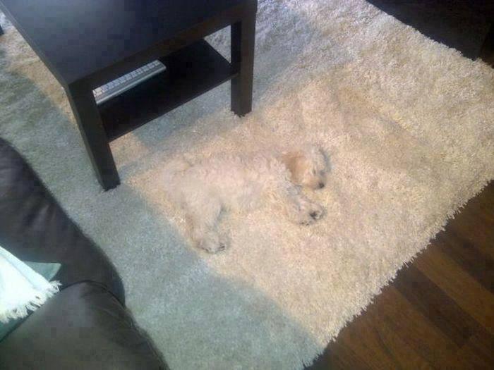 camuflagedog