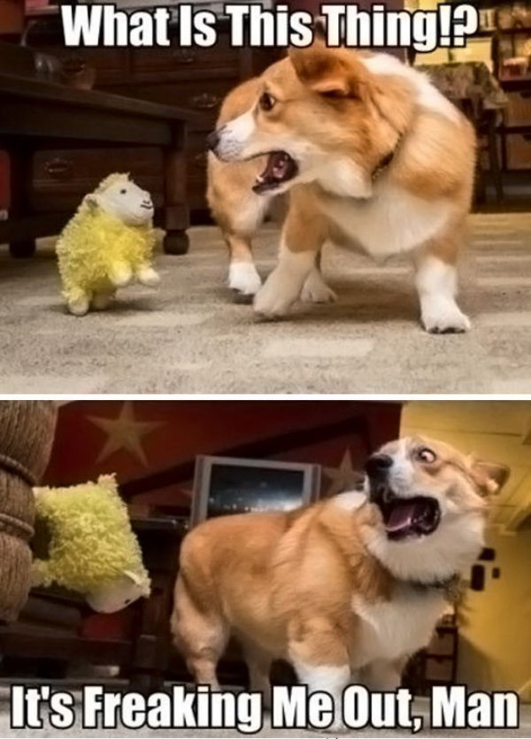 funny-dog-scared-by-a-toy