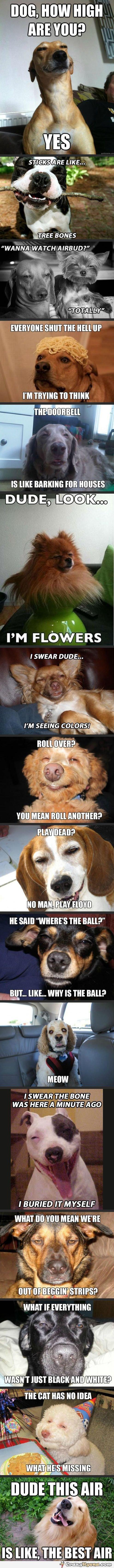 stonerhunde
