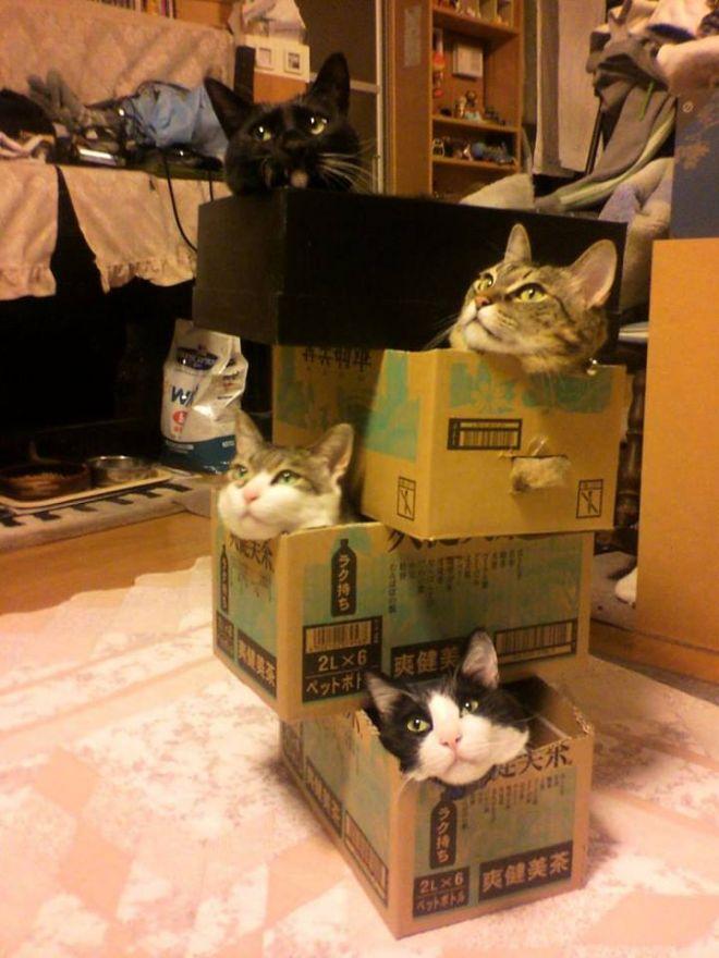 katte-tårnet