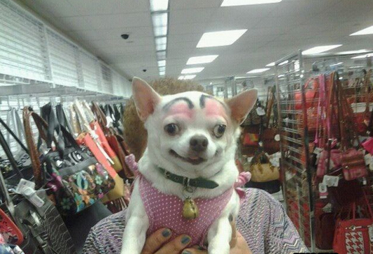 dog-grooming-fail