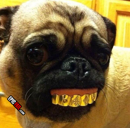 pet-owner-fail-dog-bling