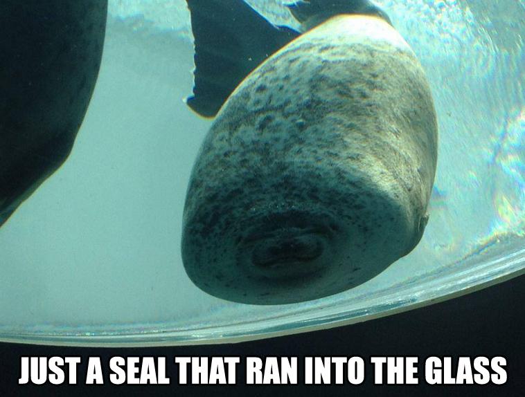 seal-fail