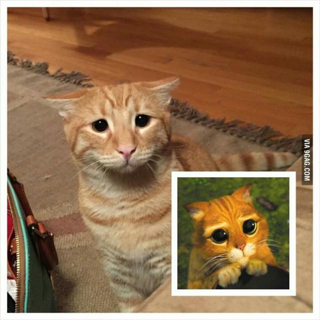 har vi ikke set den kat før