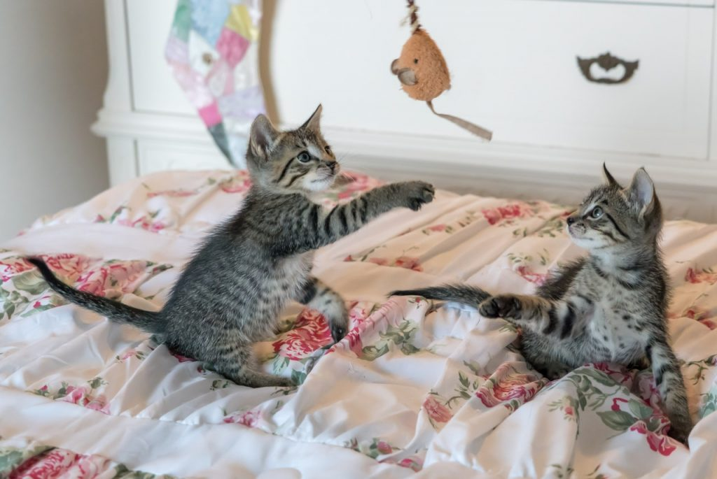 katte der leger