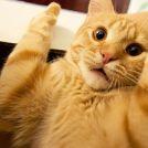 Video-samling af katte der bliver bange