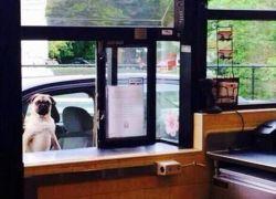 Kan jeg få lov at bestille?