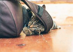 Har kæledyret ødelagt dit gulv?