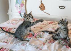 Forkæl din kat med noget underholdende legetøj
