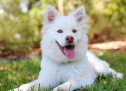 Sådan forsikrer du din hund bedst